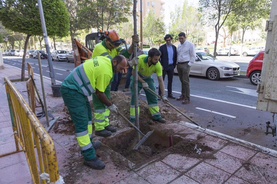 El Ayuntamiento concluye los trabajos de reposición de más de 600 árboles y la eliminación de 300 alcorques sin uso