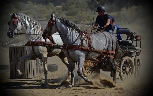 El VII Concurso de Hípica Interescuelas, referente en la provincia de Almería