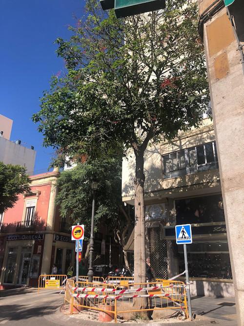 El Ayuntamiento retirará un árbol en la Plaza del Carmen ante el riesgo de caída