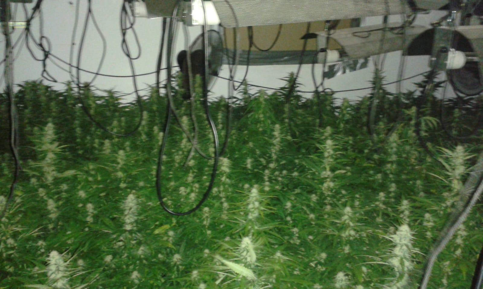 Bomberos plantación marihuana