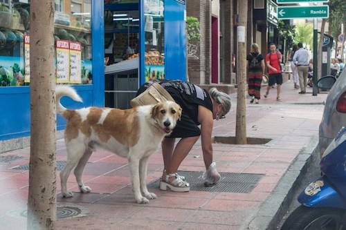 ordenanza animales