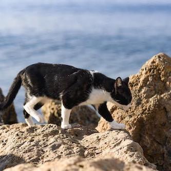 Animales Almería método CES/CER