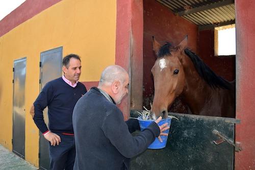 Almería deportes hipoterapia